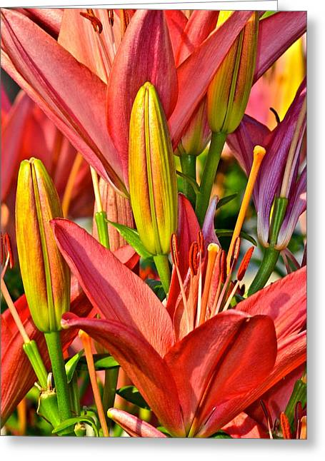Summer Bouquet Greeting Card by Frozen in Time Fine Art Photography