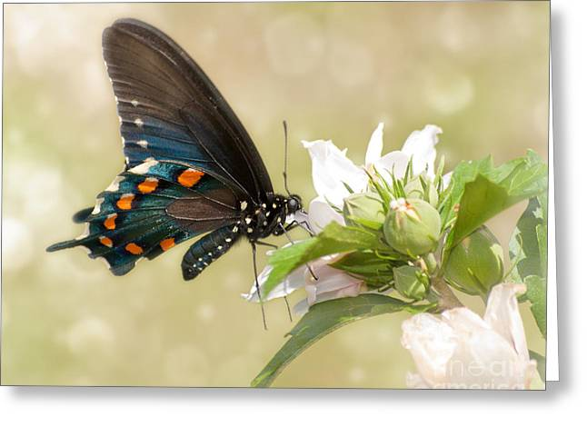 Summer Butterfly Greeting Card by Sari ONeal