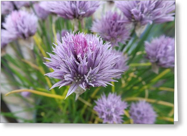 Summer Chives Greeting Card