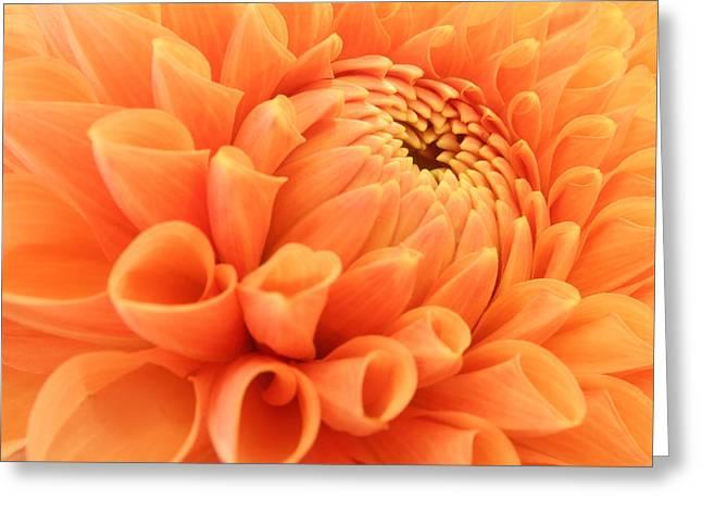 Summer Dahlia Greeting Card by Marc Huebner