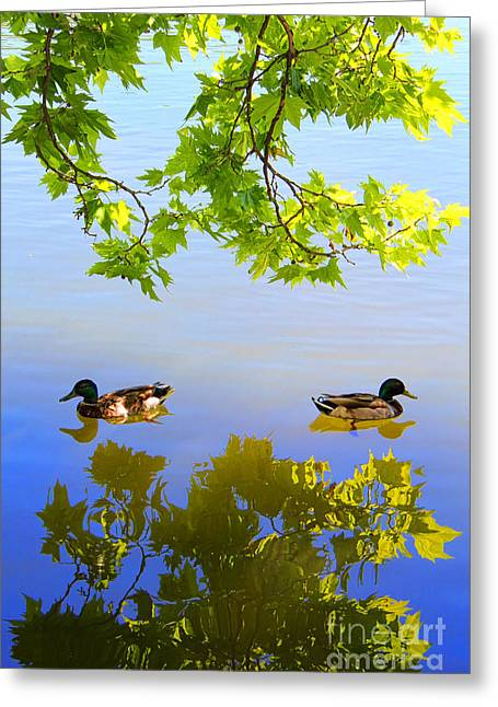 Summer Day On The Lake Greeting Card by Mariola Bitner