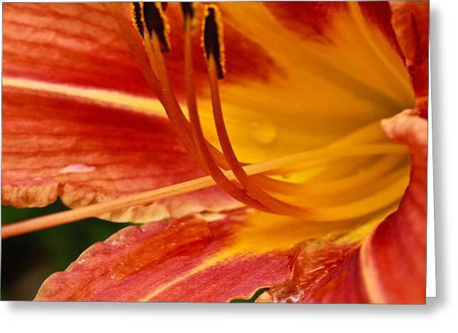 Summer Daylily Greeting Card