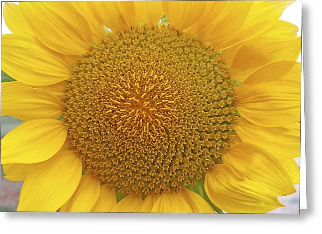 Summer Days Greeting Card by Georgia Fowler