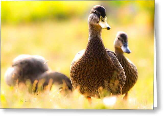 Summer Ducks Greeting Card