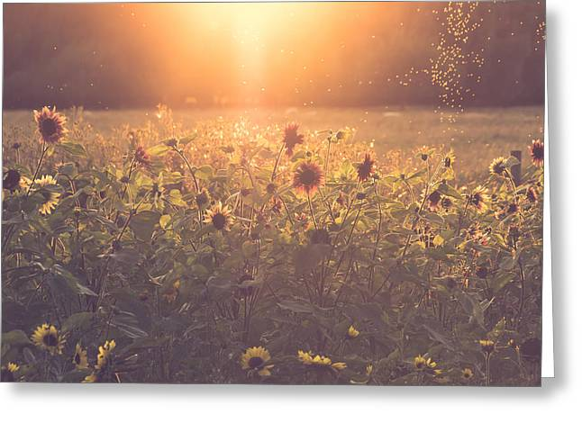 Summer Evening Greeting Card by Chris Fletcher