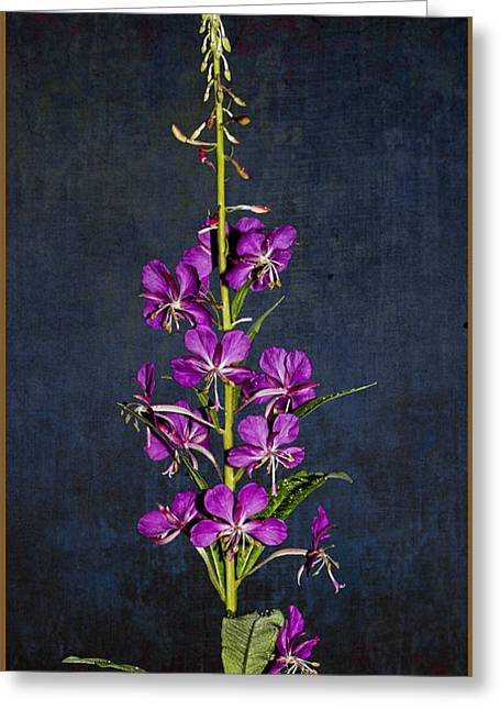 Summer Fireweed Greeting Card