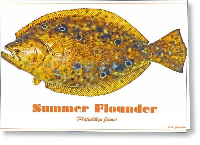 Summer Flounder Greeting Card by A Gurmankin