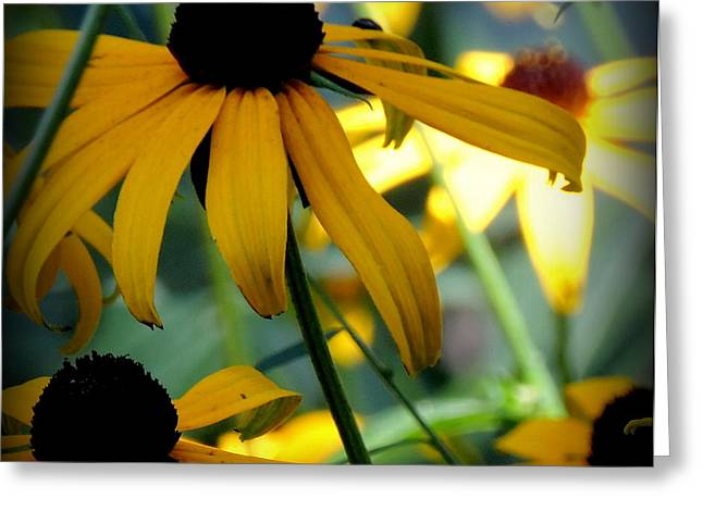 Summer Flowers Greeting Card
