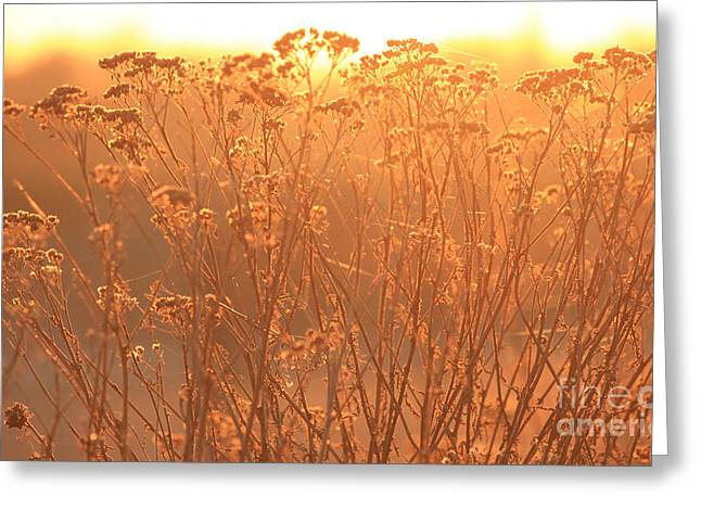 Summer Glow Greeting Card
