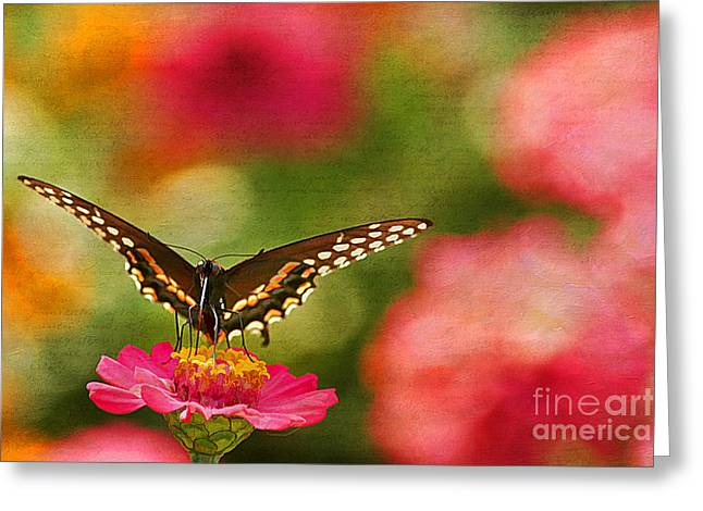Summer Grace Greeting Card by Darren Fisher