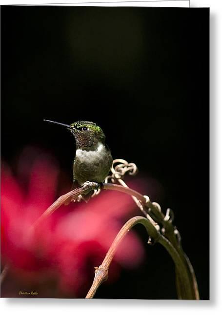Summer Hummingbird Perched On Vine Greeting Card