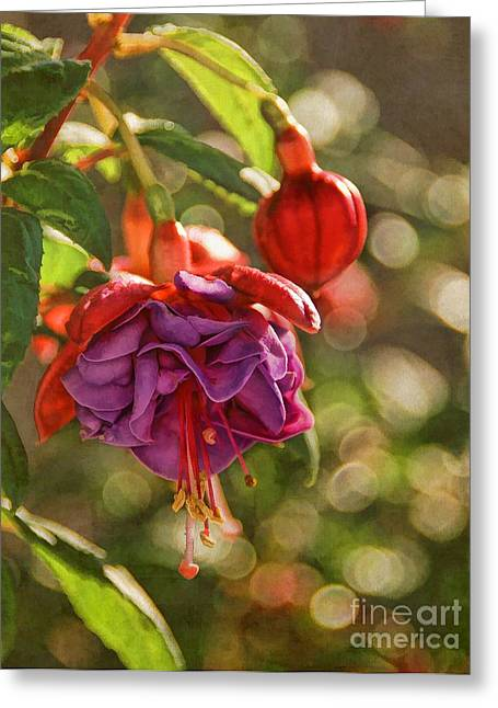 Summer Jewels Greeting Card by Peggy Hughes