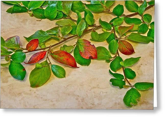 Summer Leaves Greeting Card