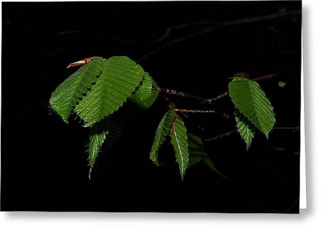 Summer Leaves On Black Greeting Card