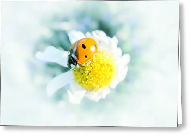 Summer Light Greeting Card by Marianna Mills