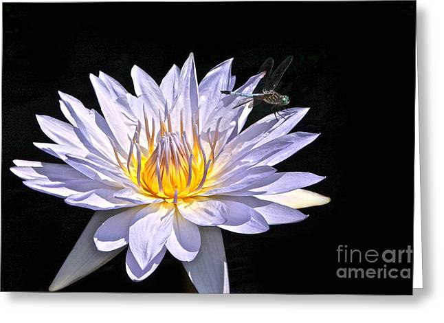 Summer Magic -- Dragonfly On Waterlily On Black Greeting Card