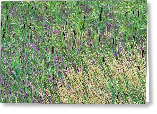 Greeting Card featuring the photograph Summer Marsh by Alan L Graham