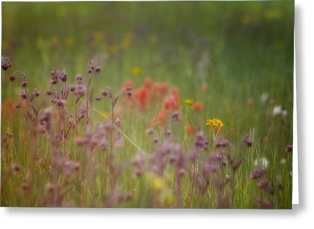 Greeting Card featuring the photograph Summer Meadow by Ellen Heaverlo