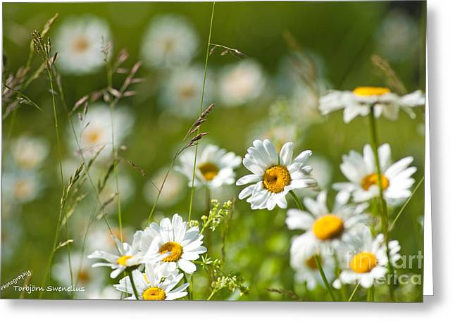 Summer Meadow Greeting Card