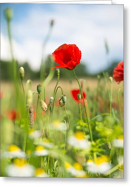 Summer Meadow With Red Poppy Greeting Card by Matthias Hauser