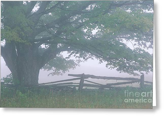 Greeting Card featuring the photograph Summer Morning Fog by Alan L Graham