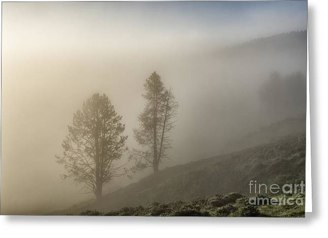 Summer Morning In Yellowstone Greeting Card by Sandra Bronstein