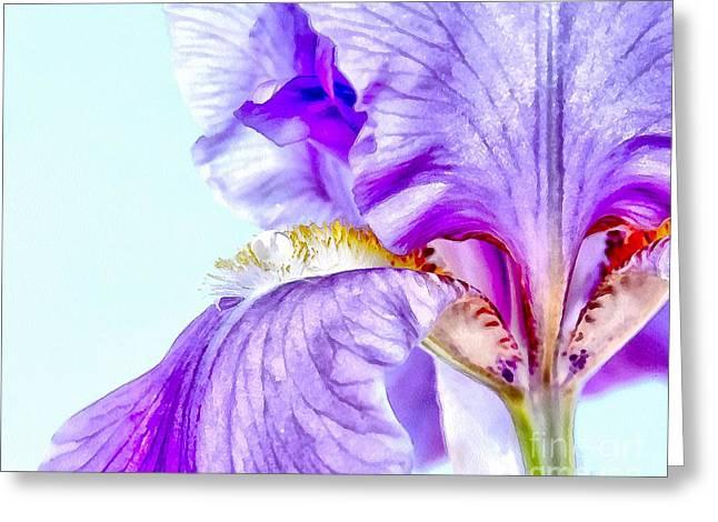 Summer Of The Iris Greeting Card
