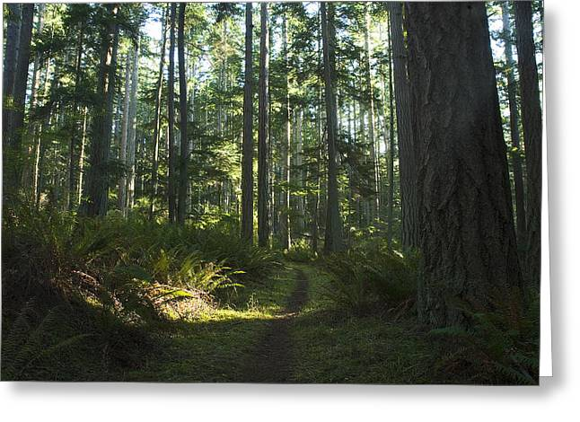 Summer Pacific Northwest Forest Greeting Card