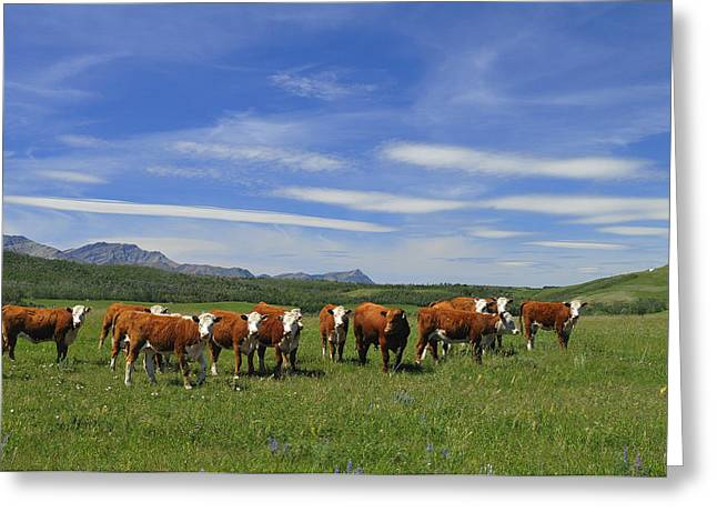 Summer Pastures Greeting Card by Clay and Gill Ross
