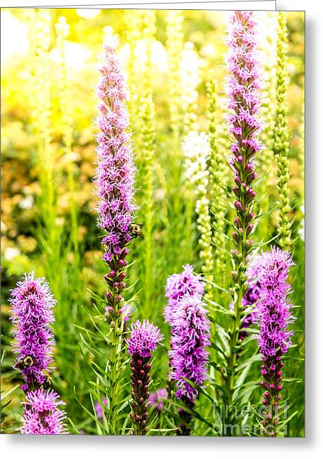 Summer Pink 2 Greeting Card by Susan Cole Kelly Impressions