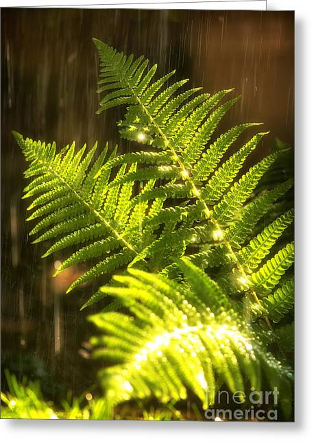Summer Rain Greeting Card by Jane Rix
