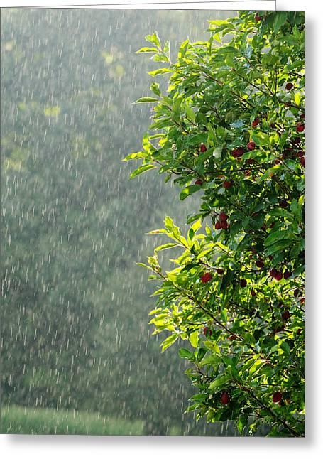 Summer Rain Greeting Card by Norman Pogson