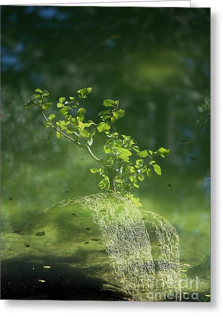 Summer Reflections Greeting Card by Sharon Elliott