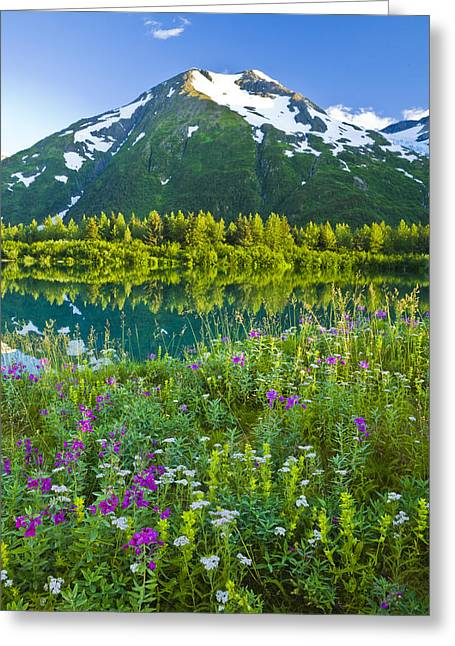 Summer Scenic In Portage Valley And Greeting Card
