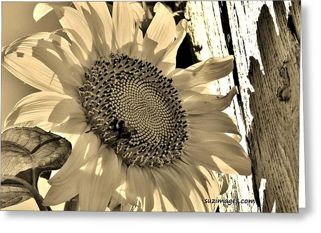 Summer Sun Greeting Card