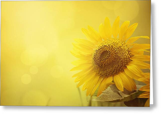 Summer Sunflower Background Greeting Card