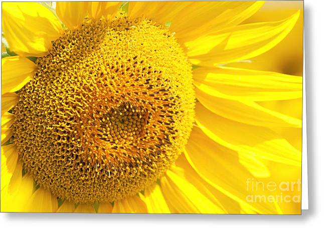 Summer Sunflowers Greeting Card by Boon Mee