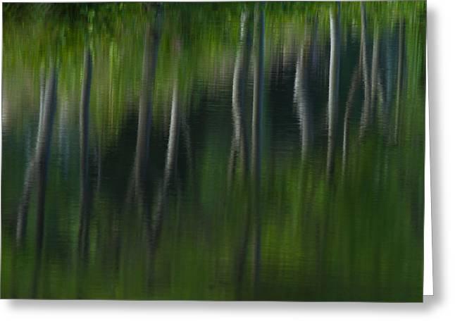 Summer Trees Greeting Card by Karol Livote