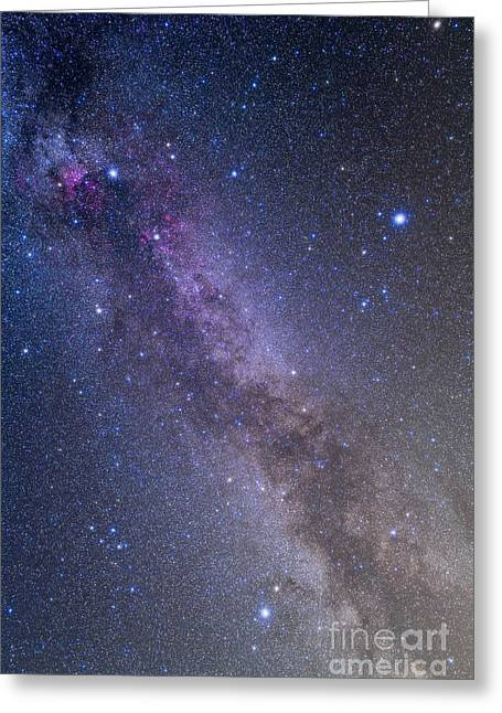 Summer Triangle Area Of The Northern Greeting Card by Alan Dyer