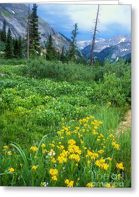 Summer Vista Near Durango Greeting Card