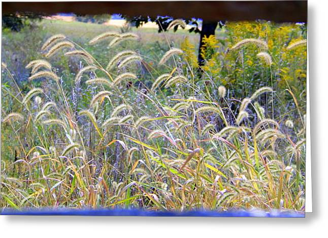 Summer Wheat Greeting Card