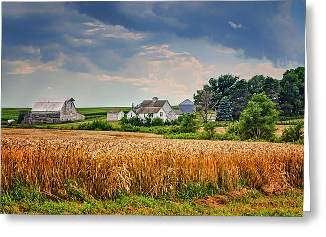 Summer Wheat - Nebraska Farm Greeting Card