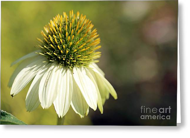 Summer White Greeting Card