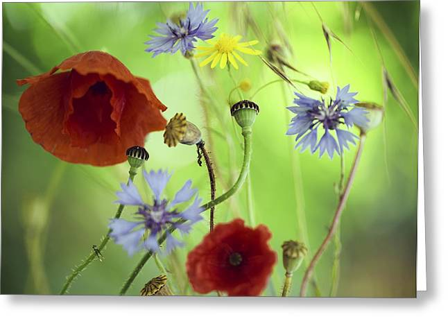 Summer Wildflower Color Greeting Card