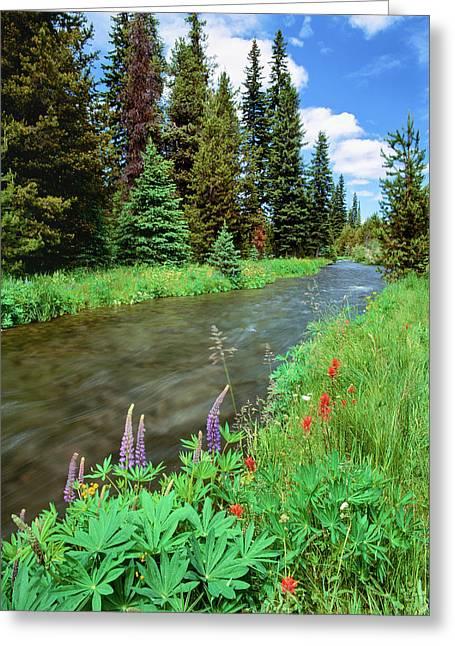 Summer Wildflowers Bloom Greeting Card