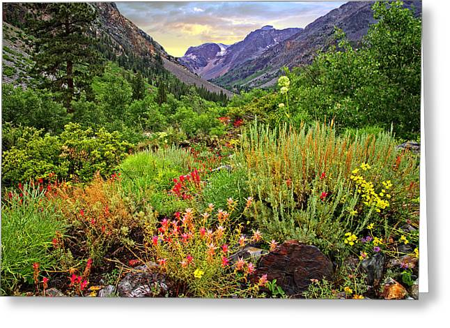 Summer Wildflowers In Lundy Canyon Greeting Card