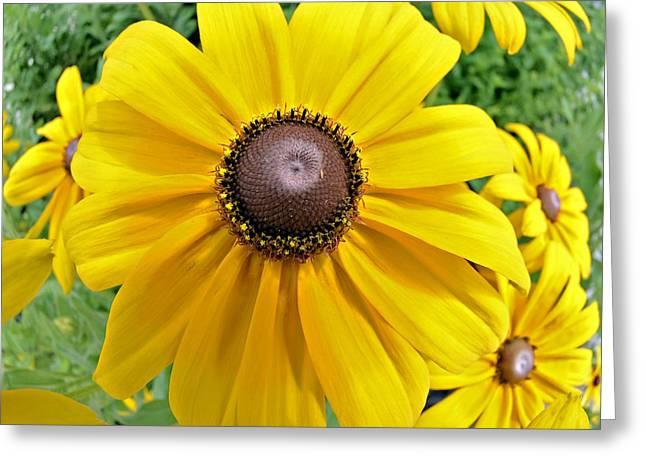 Summers Bloom Greeting Card by Susan Leggett