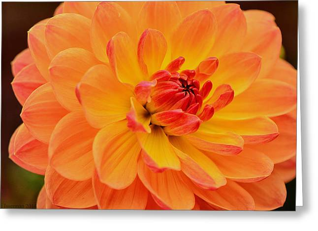 Summer's End Greeting Card by Kathi Isserman