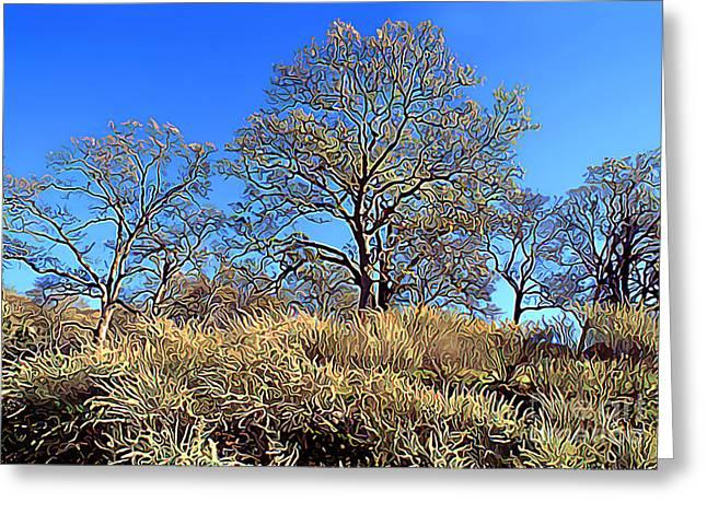 Summertime Oak Trees Greeting Card by Wernher Krutein