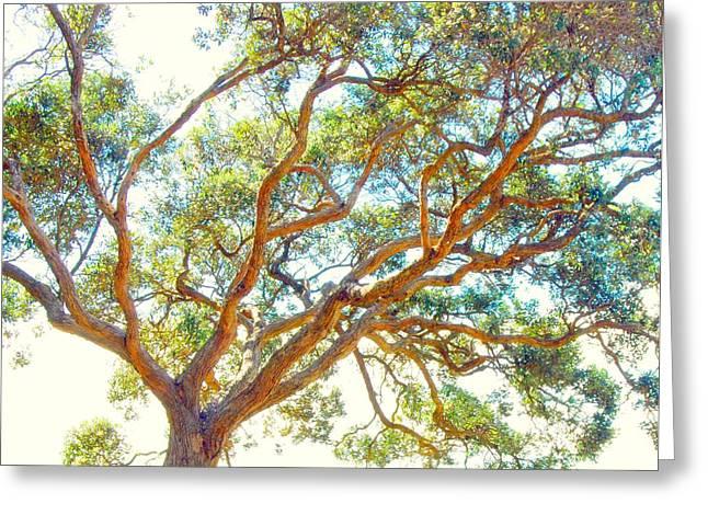 Summertime Tree Greeting Card